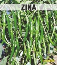 Zina Chilli Seeds