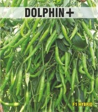 Dolphin+ Chilli Seed