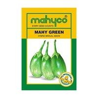 MAHY GREEN Hybrid Brinjal Seeds