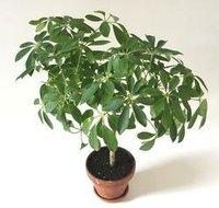 Indoor and Decorative Plants