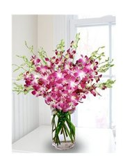 Blooming Orchids Flowers
