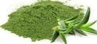 Aloe Vera Dry Powder