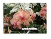 Flowering Plants (Orchids)