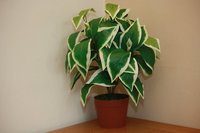 Green Potted Indoor Plants