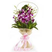 Orchid Gala Flower Bunch