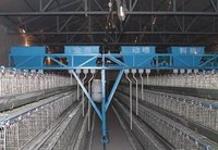 Automatic Poultry Farming Feeding System For Chicken