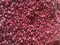 Export Quality Indian Fresh Red Onion
