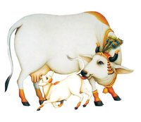 Kamdhenu Cattle Feed