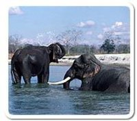NORTHERN RAJASTHAN WILD LIFE TOUR