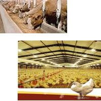 Feed Industrial Chemicals