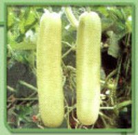 Bottle Gourd Seeds