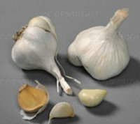 Oleoresin Garlic