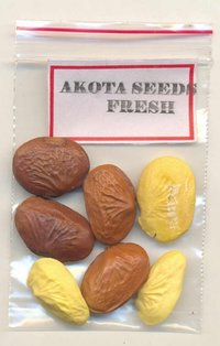 Mono Herbal Akota Seeds