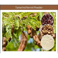 Tamarind Gum - Food Grade