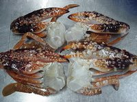 Frozen Crabs