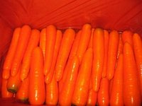 Fresh Chinese Carrot