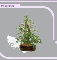 Artificial Decorative Plants