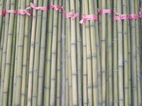 Bamboo Poles Sticks