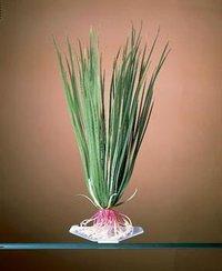 Penn Plax Hair Grass