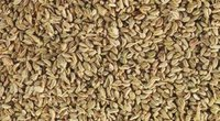 Ajwain (Bishop Weed)