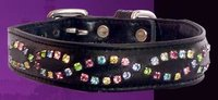 Multi Eye Baby Dog Collar