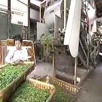Green Tea Processing Machines