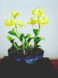 Yellow Mini Orchid Clay Flowers