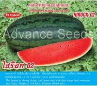 Hirock 01 Watermelon Seed