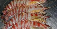 Bamboo Shrimps