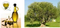 VIRGIN OLIVE OIL 100%