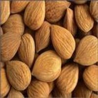 American Type Almond