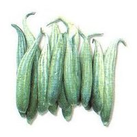 Fresh Snake Gourd