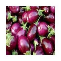 Fresh Brinjal