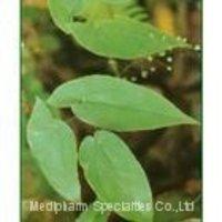 Horny Goat Weed/ Epimedium