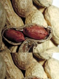 Groundnuts In Shell