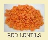Red Lentils
