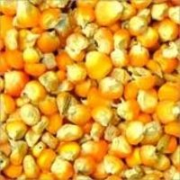 Natural Yellow Maize