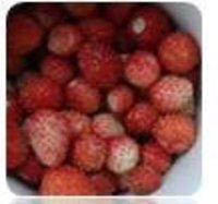 Frozen Wild Strawberry