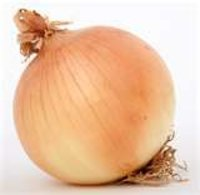 Good Quality Yellow Onion