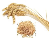 Broken Wheat (Dalia)