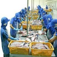 Seafood Processing Chemicals