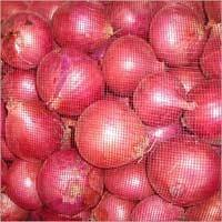 Fresh Onions