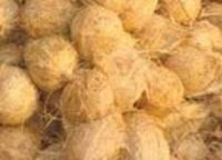 We provide completely husk peeled coconuts or...