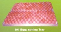 101 Egg Setting Trays