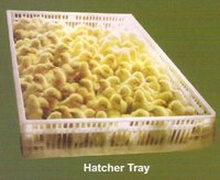 Hatcher Trays