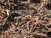 Shredded Ferrous Scraps
