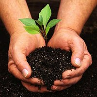 Garden Fertilizers And Plant Foods