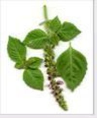 Tulsi Power