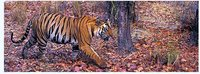 Taj With Tigers Tours