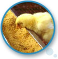 Poultry LIV - 100 Powder And Liquid
